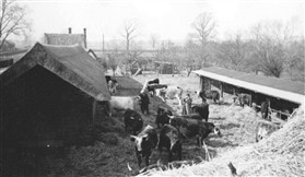 Photo:Grove Farm yard about 1950