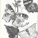Page link: Butterflies and the Clunch Pit